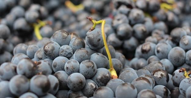 della-toffola-winemaking